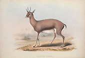 Zoologia Typica Fraser Louis 1847