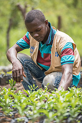 4 June 2019, Meiganga, Cameroon: 26-year-old CAR refugee Daina Caporal acts as community mobilizer in collaboration with the Lutheran World Federation. Together with a group of 10 refugees, they run a tree nursery producing 5,000 plants of Lemon Plant and Acacia, to be planted around the Ngam refugee camp as a way of caring for the environment.  Supported by the Lutheran World Federation, the Ngam refugee camp, located in the Meiganga municipality, Adamaoua region of Cameroon, hosts 7,228 refugees from the Central African Republic, across 2,088 households.
