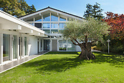 modern architecture, beautiful garden with old olive tree