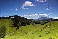 New Zealand Pastures