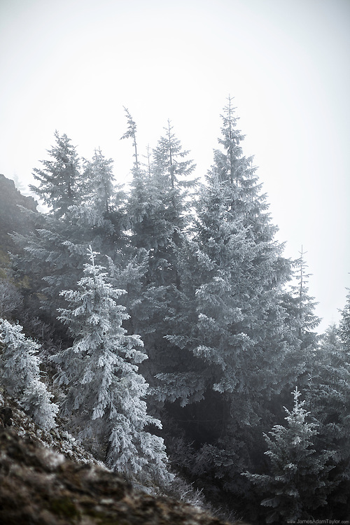 Near the summit of Table Mountain on the Washington side of the Columbia River Gorge, winds whip the clouds through the tree tops, leaving a layer of hoar frost. This crunchy crystalline coating sticks to the wind swept side of exposed needles and limbs, occasionally the high winds break small chunks free resulting in what appears to be a very light snowfall. <br /> The winter of 2013 and so far into 2014 has been an exceptionally dry year in the Cascades, perfect  for those looking to enjoy a steep hike along an exposed ridge line, but the tiny amount of water that freezes to surfaces directly from the clouds is hardly enough to keep the region moist during the traditionally dry summers. Only time will tell if precipitation in the cascades will increase in the coming months. If not the region may be in store for another harsh fire season.