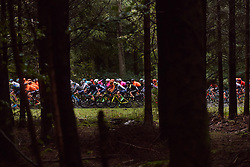 The peloton speed through the trees at the 2020 Liège Bastogne Liège, a 135 km road race from Bastogne to Liège, Belgium on October 4, 2020. Photo by Sean Robinson/velofocus.com