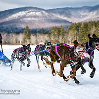 Dog sledding in the mountains of New Hampshire.<br /> <br /> All Content is Copyright of Kathie Fife Photography. Downloading, copying and using images without permission is a violation of Copyright.