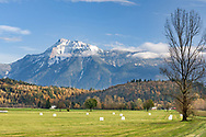 Fresh snow on Mount Cheam (Lhílheqey) from farmland in Agassiz, British Columbia, Canada.  The white bales of hay on the field are likely the last harvest for the year before winter.