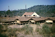 Timber processing sheds drying wood in rural area near Curitiba, Paraná state, Brazil 1962 Paraná pine trees, Araucaria angustifolia growing in background