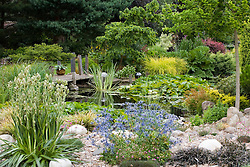 The pond with water lilies and 'jetty' in high summer. Foreground planting of Eryngium x oliverianum and Eryngium agavifolium