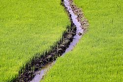 23.07.2014, Bali, IDN, Natur und Sehenswuerdigkeiten in Indonesien, im Bild junge Reissetzlinge mit Bewaesserungskanal an den Reisterassen von Jatiluwih, Bali, Indonesien. EXPA Pictures © 2014, PhotoCredit: EXPA/ Eibner-Pressefoto/ Schulz<br /> <br /> *****ATTENTION - OUT of GER*****