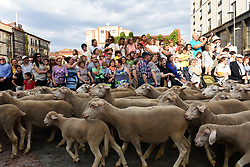 June 9, 2017 - Soria, Spain - Sheep are mustered along the streets of Soria city center during the annual livestock migration festival in Soria, north Spain. (Credit Image: © Jorge Sanz/Pacific Press via ZUMA Wire)