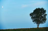 Arbol en medio de un paisaje con la luna llena al fondo<br /> <br /> Tree in a landscape with full moon in the background