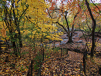 A woodland path along the Gill in the Ramble of Central Park