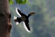 Yunnan - Dehong rainforest wildlife
