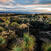 Sunset across yucca and lava beds in the arid highlands of New Mexico.