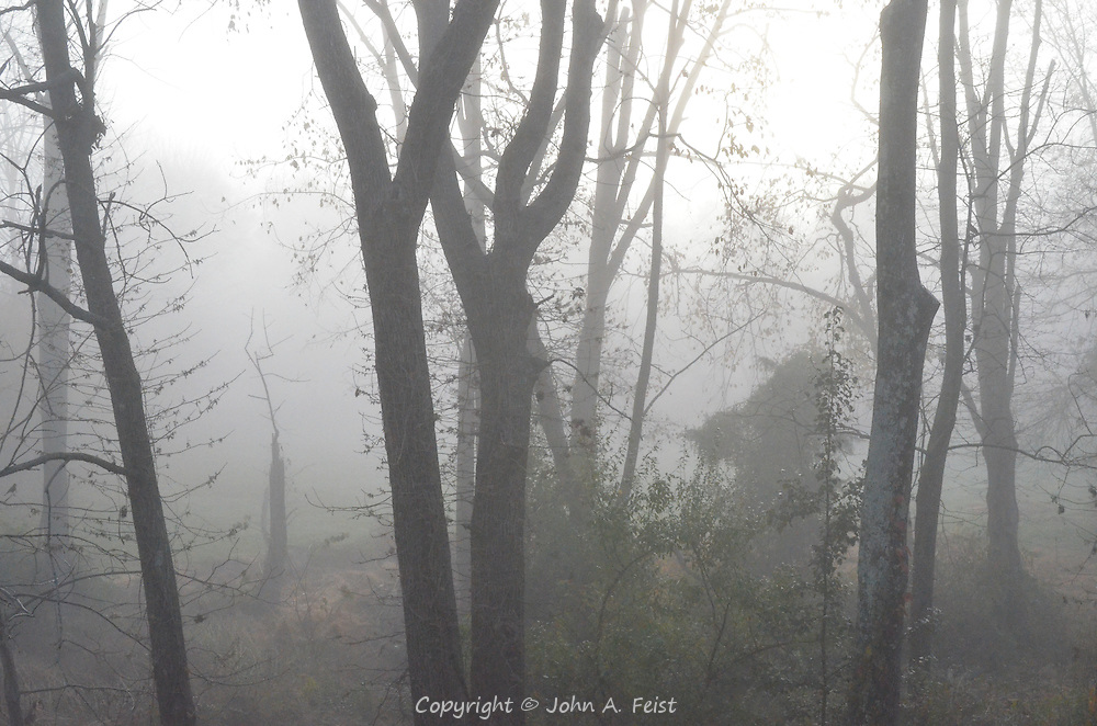 """I woke up to see the eerie shroud of fog here in Hillsborough, NJ.  Ironically, an artist friend had asked me a few days earlier if I had any photos of """"fogscapes""""."""