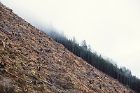 Clearcut on the edge of Oswald West State Park, OR.