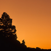 A hiker sits on an outcrop below a pinyon pine in California's Sierra Nevada. Behind are the Minarets.