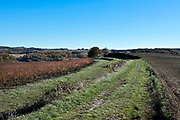 industrial agriculture and vineyard landscape France in the Languedoc Aude
