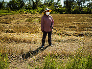 """08 DECEMBER 2015 - KO WAI, NAKHON NAYOK, THAILAND:  A woman walks through her just harvested rice paddy during the rice harvest in Nakhon Nayok province, about two hours north of Bangkok. Thai agricultural officials expect rice prices to go up by as much as 15% as global production of rice is cut by the Pacific Ocean El Niño weather pattern. Thailand's rice production is expected to drop in the coming year. Persistent drought has reduced the main crop, currently being harvested, and the military government has ordered farmers not to plant a second crop of """"dry season"""" rice to conserve Thailand's dwindling supply of water. Thailand's water reservoirs are at their lowest seasonal levels in recent memory and little rain is expected during the dry season, which lasts until June.   PHOTO BY JACK KURTZ"""