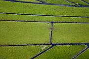 Nederland, Noord-Holland, Gemeente Ouder-Amstel, 25-05-2010. Amstelland, Polder de Rondehoep (ook Polder de Ronde Hoep), koeien liggen in de zon. Het slotenpatroon van gerende verkaveling is ontstaan ten tijde van de ontginning in de middeleeuwen. .The Polder Rondehoep (or Polder Round Hoep), cows lying in the sun. The pattern of the ditches is the result of the extraction during the Middle Ages..luchtfoto (toeslag), aerial photo (additional fee required).foto/photo Siebe Swart