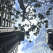 A tree, The Lloyds and The Willis Buildings. Shot on iPhone 6.