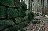 Stone Wall in the Forest, Mullerthal trail, Mullerthal, Luxembourg