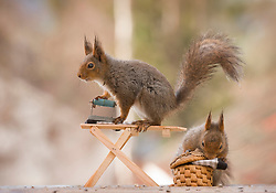 "Delightful squirrels celebrate the upcoming fashion weeks<br /> <br /> To celebrate the up-coming fashion weeks starting in September in London, Paris, Milan and New York, photographer, Geert Weggen has created a delightful fashion photo series with his squirrels.<br /> <br /> In Geert's photos, the squirrels are making their own clothes by spinning their own wool. The squirrels are wild and live in a forest just outside of Geert's house in Sweden. He has created an outdoor photo studio – just 3 metres from his kitchen window - where he leaves food hidden in various props for the squirrels to find. The squirrels come to the studio every day via the trees and Geert has formed a lovely bond with the animals. <br /> <br /> Geert loves the fact that the squirrels look so human like in the photos, especially when they are interacting with the props. It took him 2 months to complete this series and hi9s favourite part is that the series ends with the squirrels selling their clothes at a market.<br /> <br /> ""It is very time consuming to find the props. Every day I am scouring the internet looking for new props or I make the props myself. I work with the squirrels seven days a week, year after year"" says Geert."