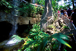 Stock photo of the interior of Cockrell Butterfly Center at the Museum of Natural Science