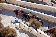 Donkeys with tourists on the path from the harbour. oia ( Ia ) Santorini Town- Greek Cyclades islands - Photos, pictures and images .<br /> <br /> If you prefer to buy from our ALAMY PHOTO LIBRARY  Collection visit : https://www.alamy.com/portfolio/paul-williams-funkystock/santorini-greece.html<br /> <br /> Visit our PHOTO COLLECTIONS OF GREECE for more photos to download or buy as wall art prints https://funkystock.photoshelter.com/gallery-collection/Pictures-Images-of-Greece-Photos-of-Greek-Historic-Landmark-Sites/C0000w6e8OkknEb8