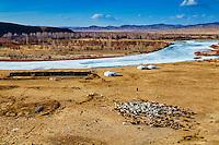 Mongolie, Province d'Arkhangai, yourtes et campement des nomades, rassemblement des troupeaux de moutons // Mongolia, Arkhangai, yurt and nomad camp, gathering of the herd of sheeps