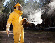 A beekeeper collects the honey from the hives in the town of Jerica in the community of Castellon de la Plana, Spain.