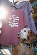 SHOT 12/30/17 4:17:34 PM - Tanner, a 13 year-old male Vizsla, poses in front of a t-shirt proclaiming a dog is the world to its owner on a trip to Taos, N.M. (Photo by Marc Piscotty / © 2017)