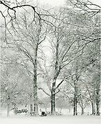 Woman in the background walking a dog in a winter squall in Stamford, Connecitcut
