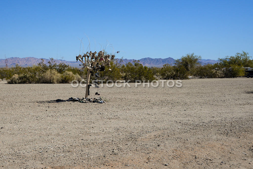 Shoe Tree in Slab City California