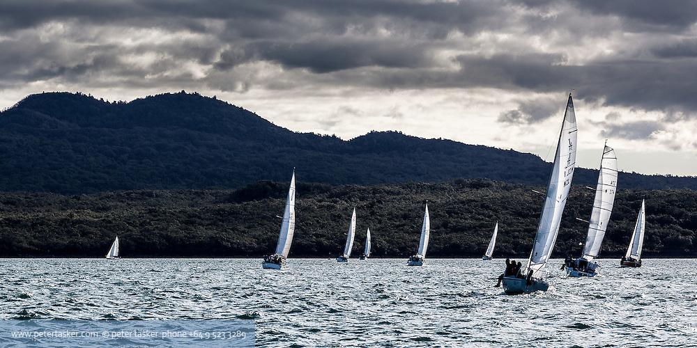 Yachts racing on Aucklands Waitemata Harbour, Hauraki Gulf, New Zealand.