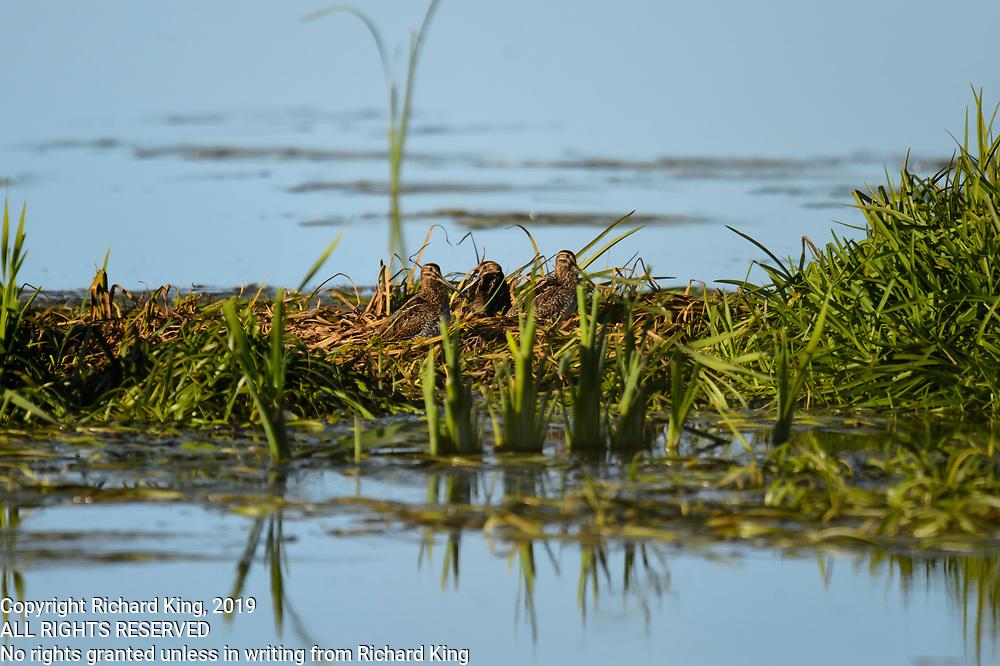 Wildlife Photographs from Quebéc, Canada