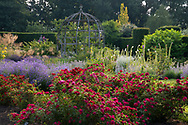 Red rambling roses in the rose garden at Waterperry Gardens.