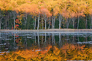 Autumn leaves reflected in a pond in the Vermont countryside, Vermont, USA