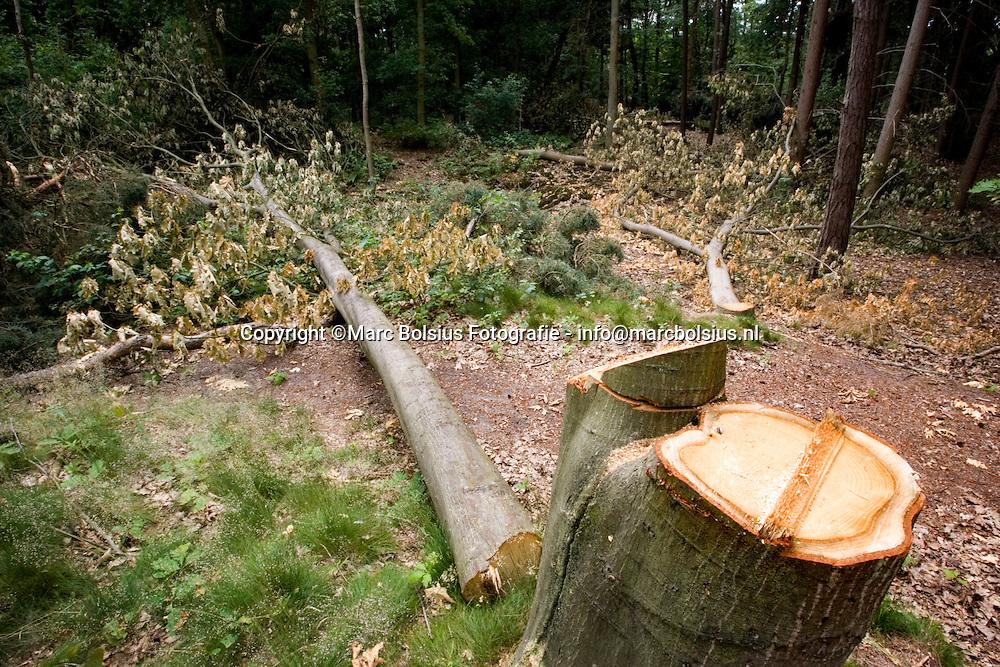 sint michielsgestel,de gekapte bomen in het bos van de gruyter.