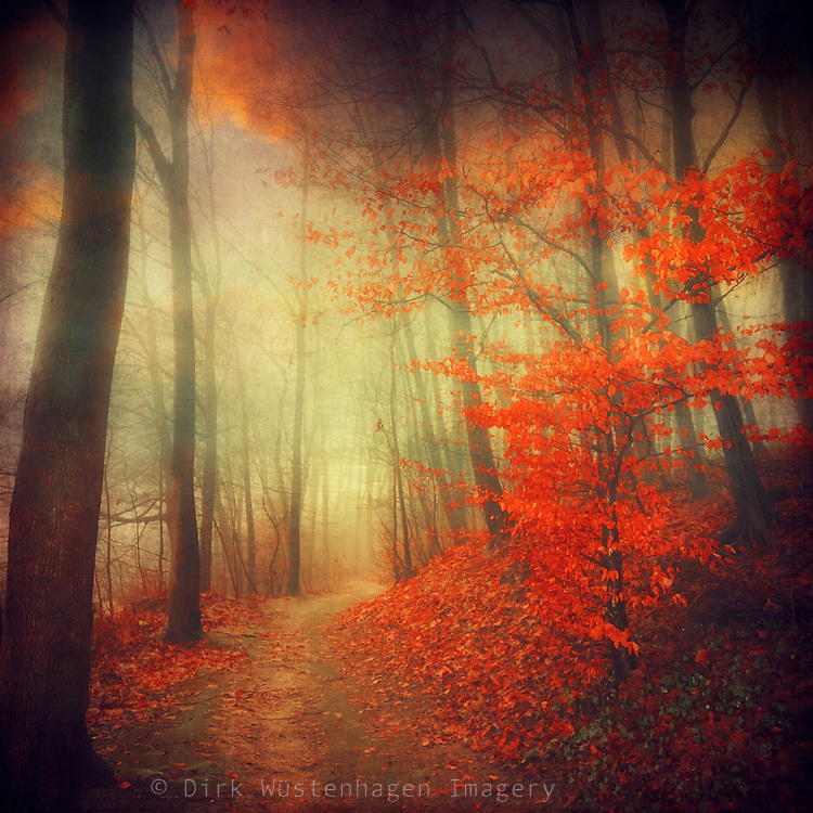 Dreamy autumnal forest scene - texturized photograph