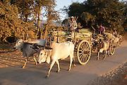 Bullock carts transporting sugar cane near Nyuangshwe, Myanmar (Burma).