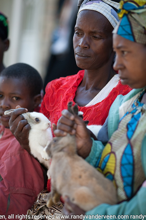 .Photo Randy Vanderveen.Rwanda.Rabbits are passed from Guardians of Hope (an HIV/AIDS support group) members to orphans and widows at the Nyrusange Baptist Church. The animals had produced enough off spring that they could be passed on to help other families out.