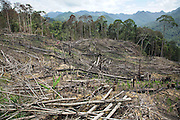 Slash and burn cultivation by native peoples to plant subsistence crops, mainly wild mountain rice. Unfortunately the Sarawak government mostly doesn't recognise pristine rainforest as ancestral lands; it is only when the settlers cut down the forest for farming, that it is recognised as their own native lands. Limbang, Sarawak, Malaysia 2015<br /><br />Borneo native peoples and their rainforest habitat revisited two decades later: 1989/1991 and 2012/2014/2015. <br /> <br /> Sarawak's primary rainforests have been systematically logged over decades, threatening the sustainable lifestyle of its indigenous peoples who relied on nomadic hunter-gathering and rotational slash & burn cultivation of small areas of forest to survive. Now only a few areas of pristine rainforest remain; for the Dayaks and Penan this spells disaster, a rapidly disappearing way of life, forced re-settlement, many becoming wage-slaves. Large and medium size tree trunks have been sawn down and dragged out by bulldozers, leaving destruction in their midst, and for the most part a primary rainforest ecosystem beyond repair. Nowadays palm oil plantations and hydro-electric dam projects cover hundreds of thousands of hectares of what was the world's oldest rainforest ecosystem which had some of the highest rates of flora and fauna endemism, species found there and nowhere else on Earth, and this deforestation has done irreparable ecological damage to that region