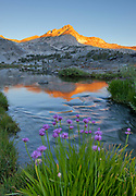 Wild Onion, Greenstone Lake and North Peak,Hoover Wilderness,Inyo National Forest, California