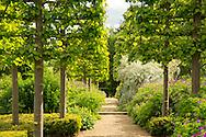 A gravel path running through pleached Tilia x europea 'Pallida' Kaiser Linden underplanted with geranium 'Patricia' at Broughton Grange, Oxfordshire, UK  Garden was designed by Tom Stuart'Smith
