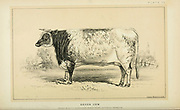 Devon Cow from Cattle and dairy farming. Published 1887 by Govt. Print. Off. in Washington. United States. Bureau of Foreign Commerce (1854-1903)