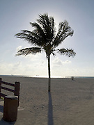 Palm tree with sun directly behind the leaves Miami USA