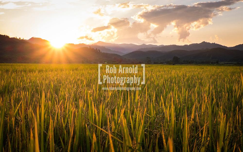 Rice fields during sunset in Luang Nam Tha, Laos