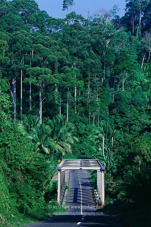Tropical rain forest & a Transfield bridge on the west coast road, Bengkulu, Sumatra, Indonesia.