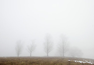 Salisbury Mills, New York -  Trees in the fog in field by the Moodna Viaduct railroad trestle on a warm winter day on Jan. 2, 2010.