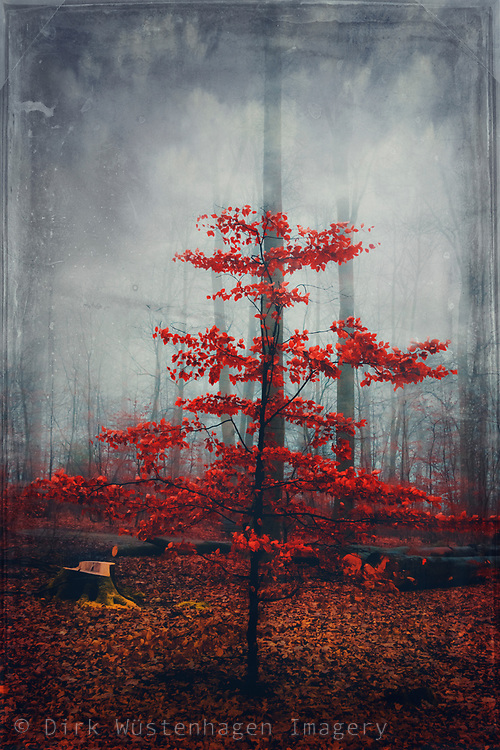 Scarlet red little tree in a mysterious forest - manipulated photograph