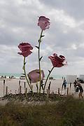 Sagamore collectors brunch, Sagamore Hotel.  Miami Art Basel 2011, Miami Beach. 3 December 2011.